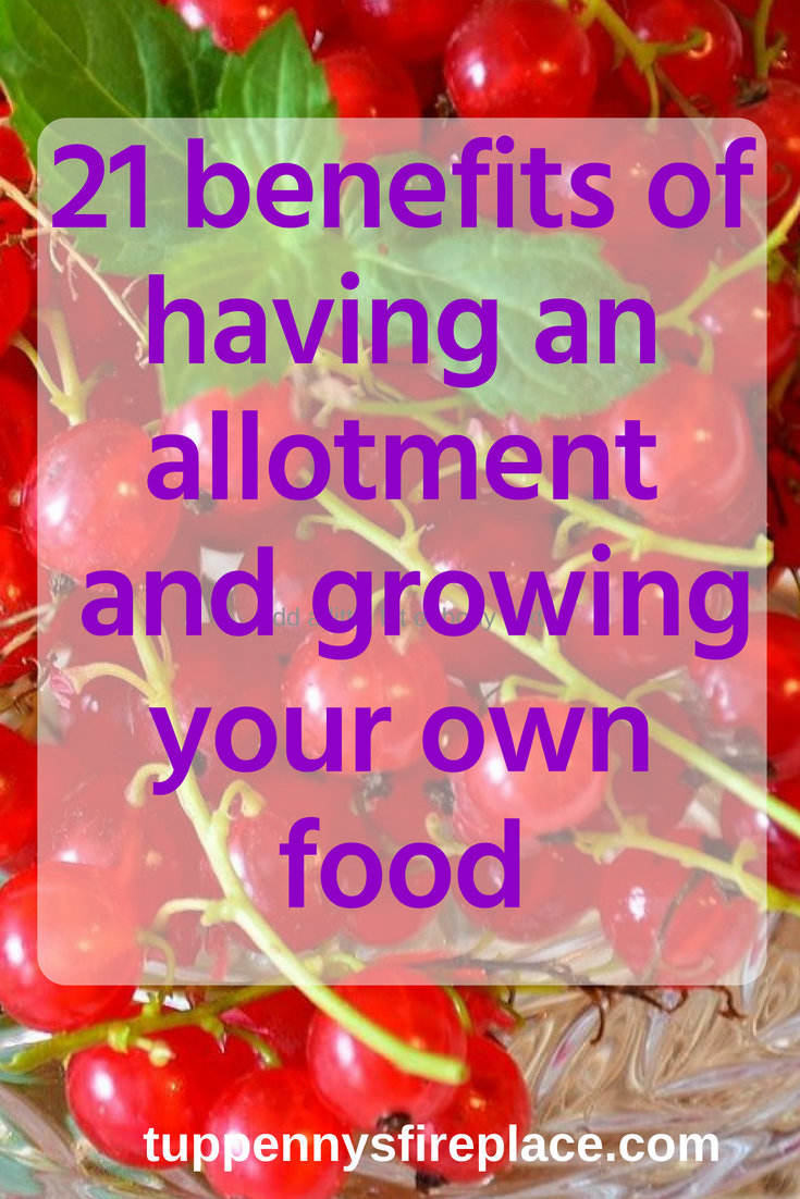 21 benefits of having an allotment and growing your own food. Grown your own and gain these amazing benefits. #cheapfood #growyourown #savemoney
