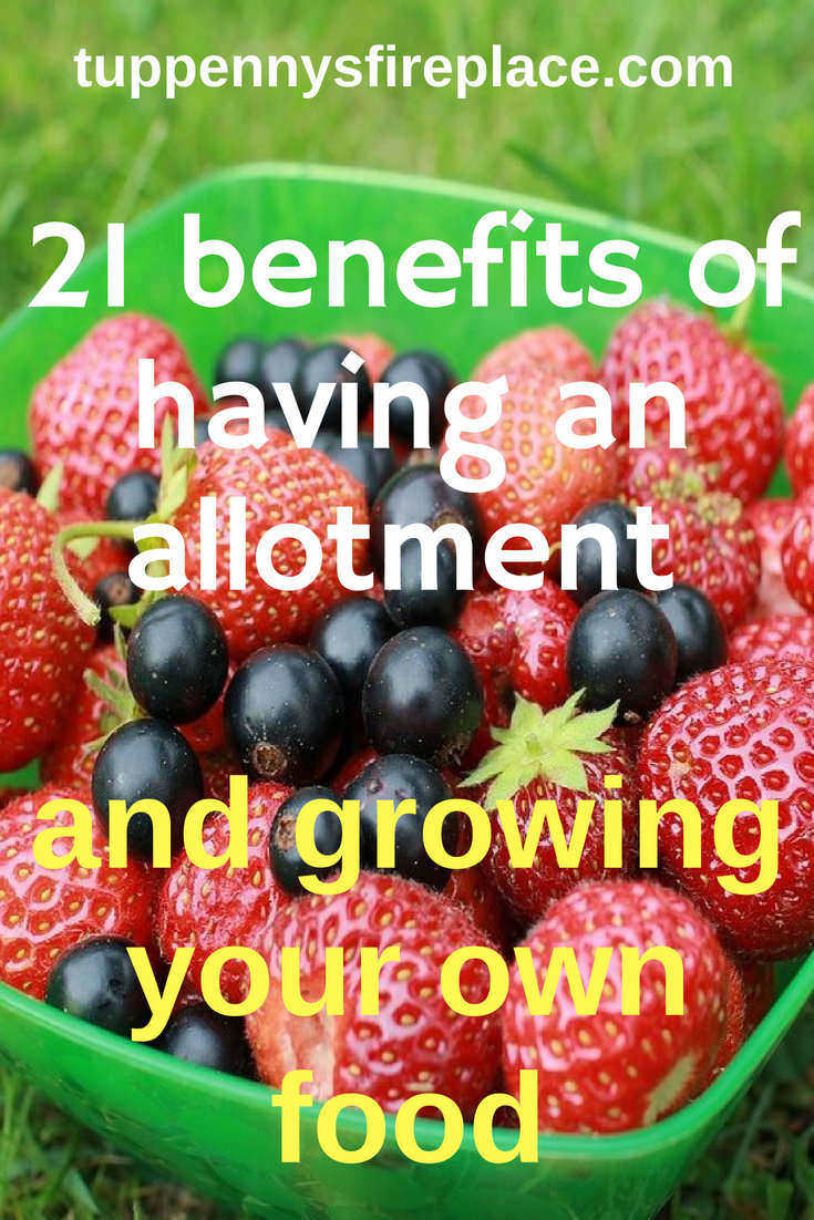 21 benefits of having an allotment and growing your own food. Grow your backyard garden and save money. #savemoney #allotment #growyourownfood #ecofriendly