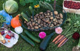 12 downsides to having an allotment and growing your own food