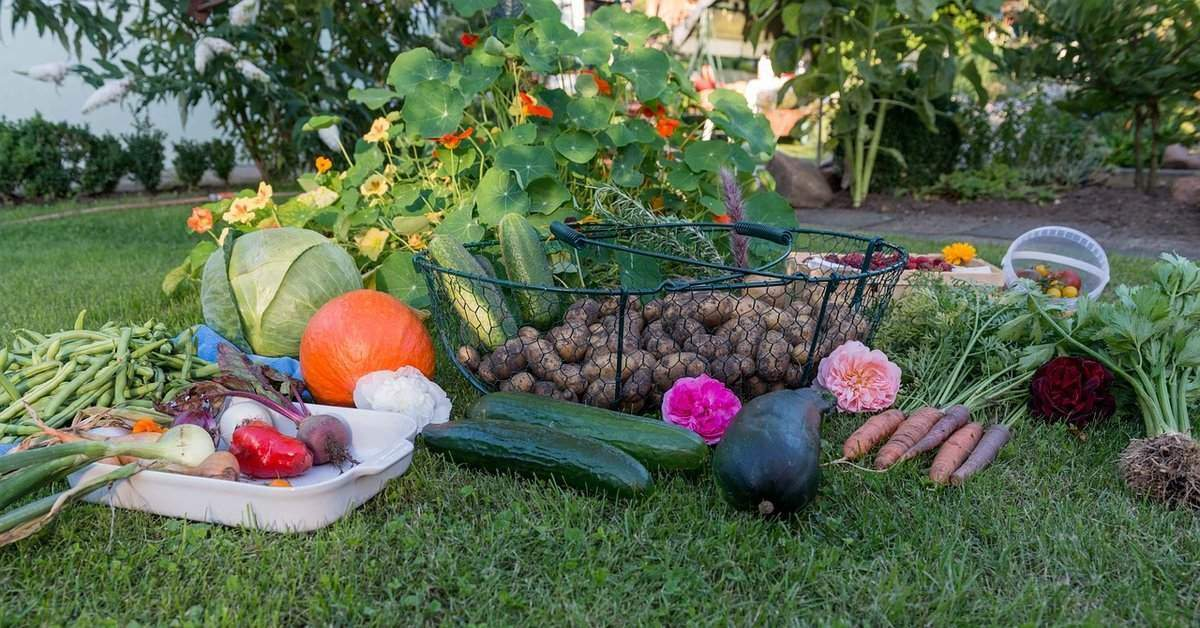 21 benefits of having an allotment