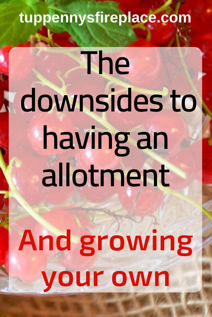 12 downsides to having an allotment and growing your own. Grow your own food? Learn the problems you may face. Allotment work is hard work, find out why. #allotment #growyourown #budgeting