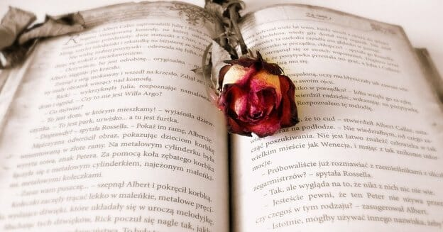 open book with dried rose